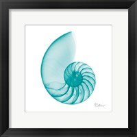 Framed Turquoise Sea Shell
