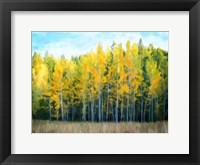 Framed Trees 1