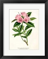 Framed Botanical 1