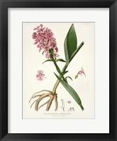 Framed Botanical 2