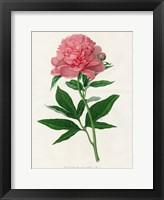 Framed Botanical 3