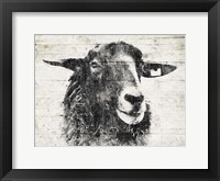 Vintage Sheep Framed Print