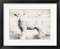 Framed Vintage Lamb