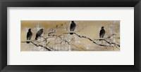 Framed Black Birds