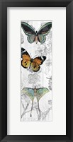 Framed Butterflies Are Free 1