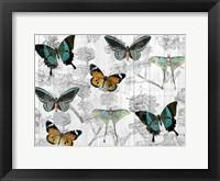 Framed Butterfly Dreams
