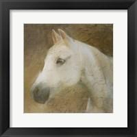 Framed Graceful Horse