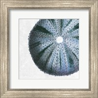 Framed Urchin Shell 3
