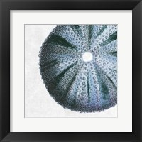 Framed Urchin Shell 3