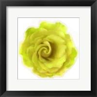 Framed Yellow Rose