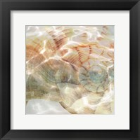Framed Shell Abstract 1