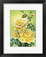 Framed Roses Yellow