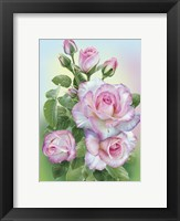Framed Morning Roses