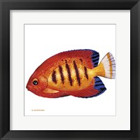 Framed Fish 2 Red-Yellow