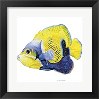 Fish 3 Blue-Yellow Framed Print