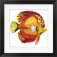 Framed Fish 3 Red-Yellow