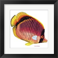 New Fish 1 Framed Print