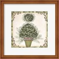 Framed Topiary I