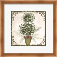 Framed Topiary IV