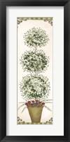 Framed Topiary V