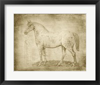 Framed Horse Anatomy 101