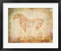 Horse Anatomy 201 Framed Print
