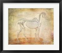 Horse Anatomy 301 Framed Print