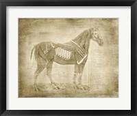 Horse Anatomy 401 Framed Print