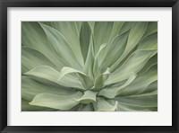 Framed Elegant Agave