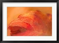 Framed Fall Leaf