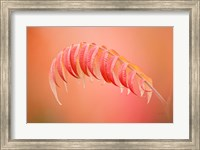 Framed Sumac Branch