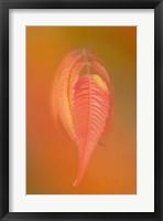 Framed Sumac Leaf
