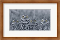 Framed Pop of Color Burrowing Owl Family