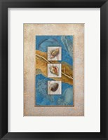 Framed Seashells I