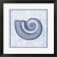 Framed Blue Nautilus D