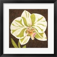 Framed Surabaya Orchid Petites A