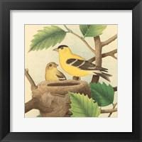 Framed Goldfinch & Warbler A