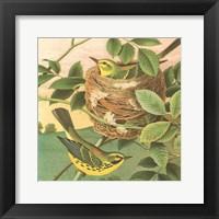 Framed Goldfinch & Warbler B
