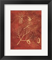 Framed Golden Oak II