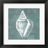 Solitary Shell II Framed Print