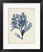 Framed Seaweed Specimens II