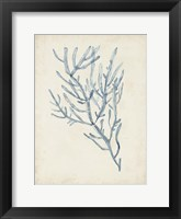 Framed Seaweed Specimens III