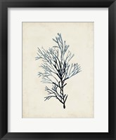 Framed Seaweed Specimens IV