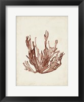 Framed Seaweed Specimens VII