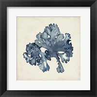 Framed Seaweed Specimens IX