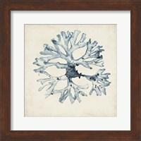 Framed Seaweed Specimens X