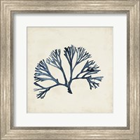 Framed Seaweed Specimens XI