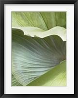 Framed Banana Leaf I