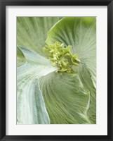 Framed Banana Leaf II