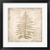 Framed Stone Leaf I